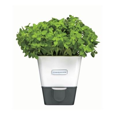 Cole & Mason H105249 Yeşillik Saklama Kabı
